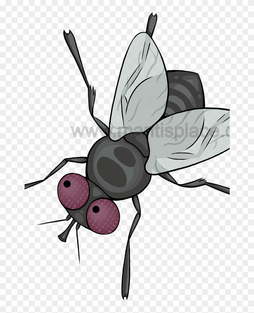 Fly clipart pupa of a. Large order approximately pupae