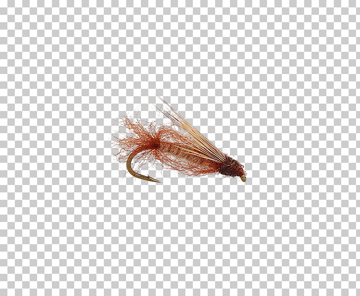 Fly clipart pupa of a. Artificial caddisfly fishing elk