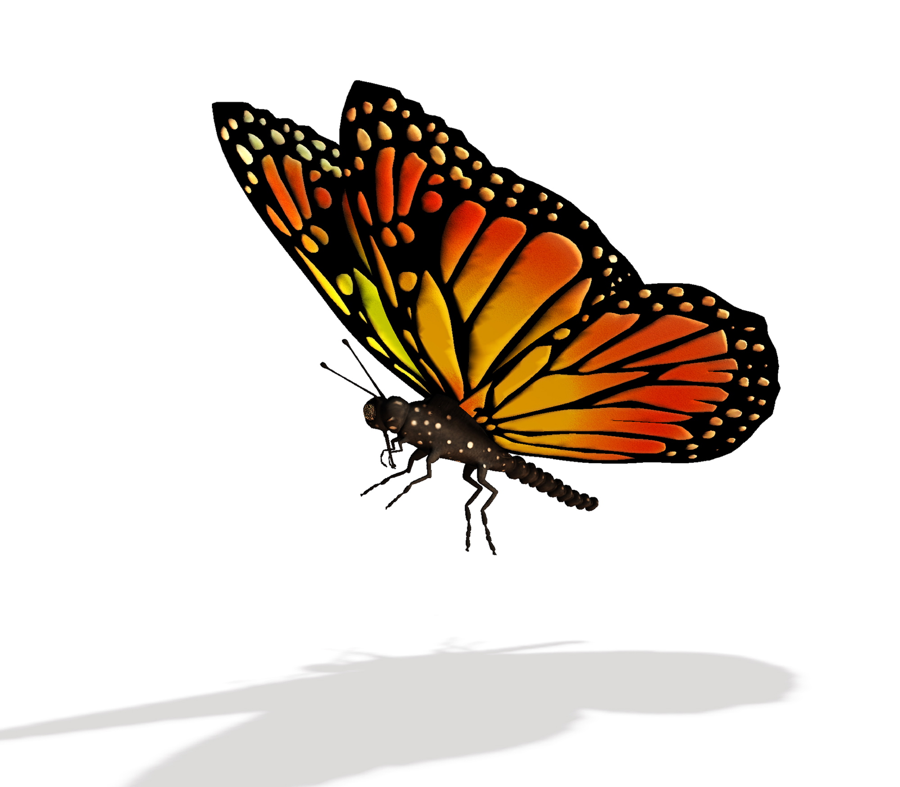 Fly clipart pupa of a. Butterfly flying from cocoon
