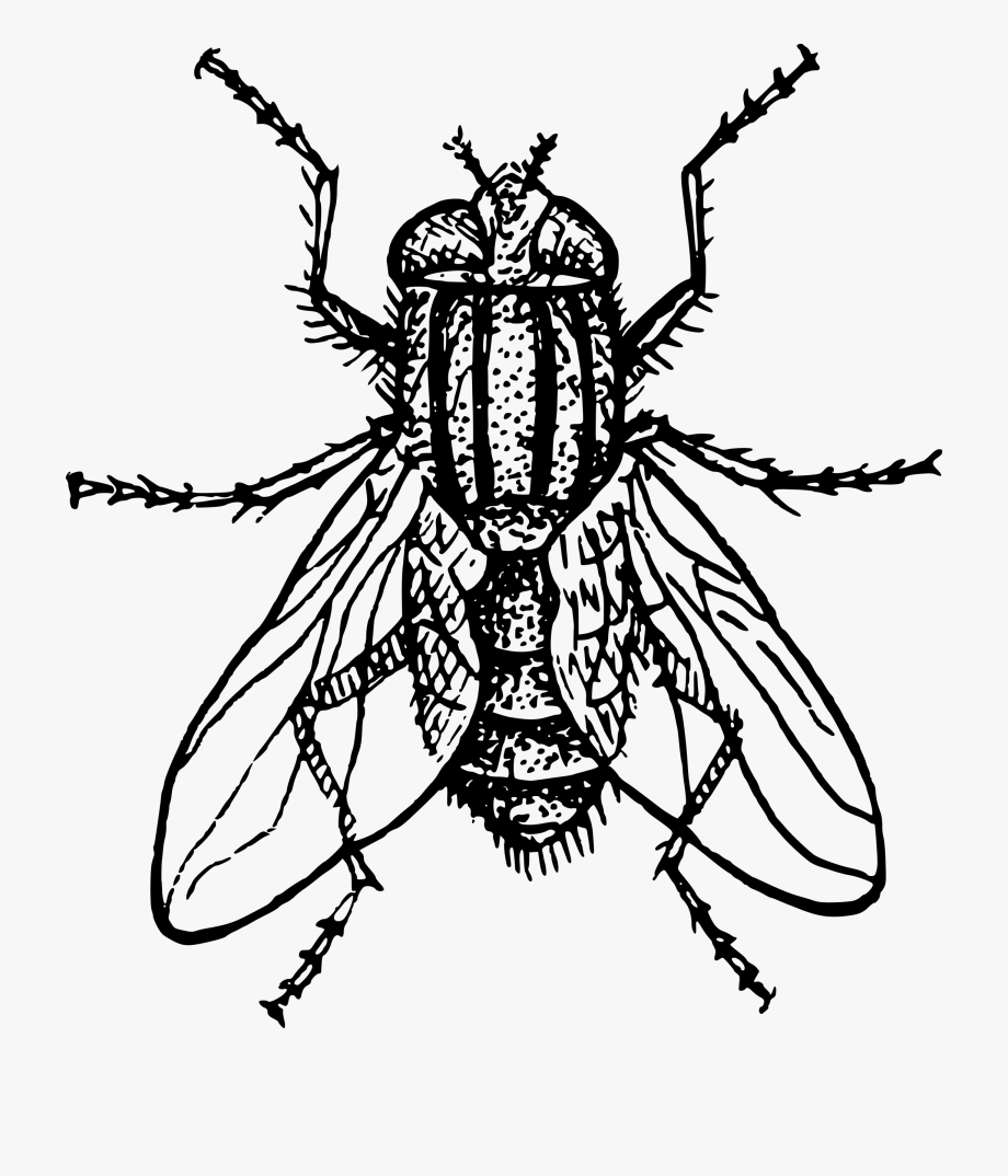 Fly clipart white. Fly clipart white. Drawing black and for