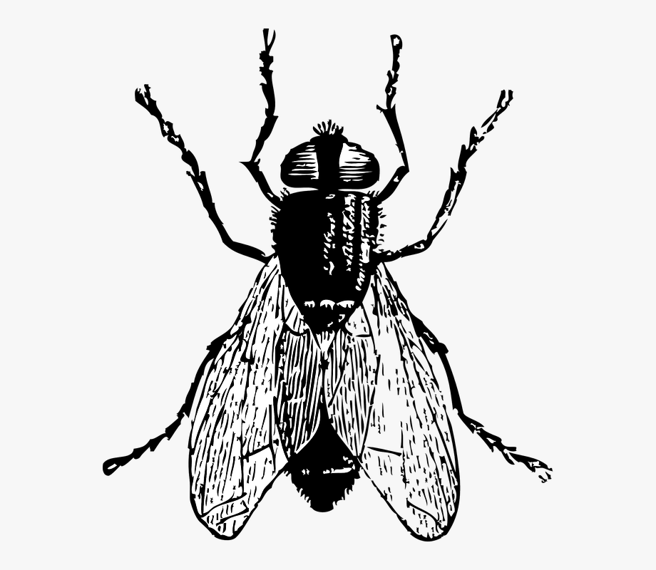 Fly clipart white. Black horse png and