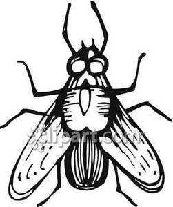 Fly clipart white. Fly clipart white. Black and panda free