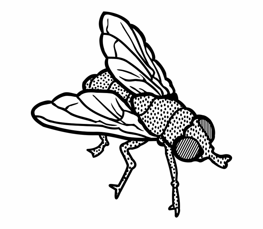 Fly clipart white. As part of the