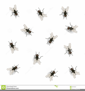 Fly clipart white. Black and free images