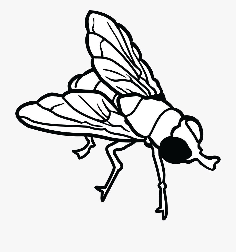 Fly clipart white. Free of a house
