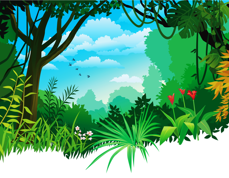 forest background clipart rainforest