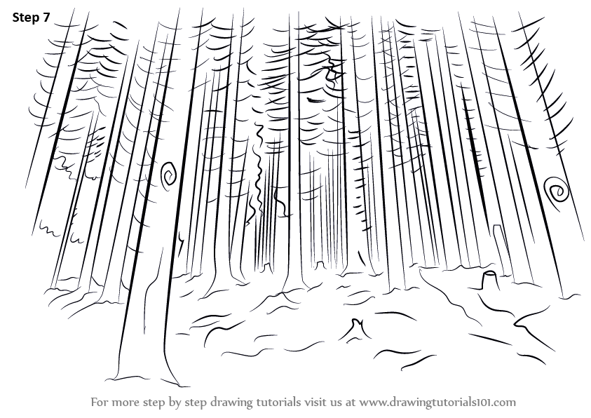 Forest background clipart drawing. Sketch