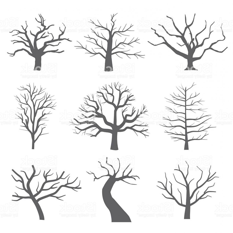 Dead tree silhouettes.