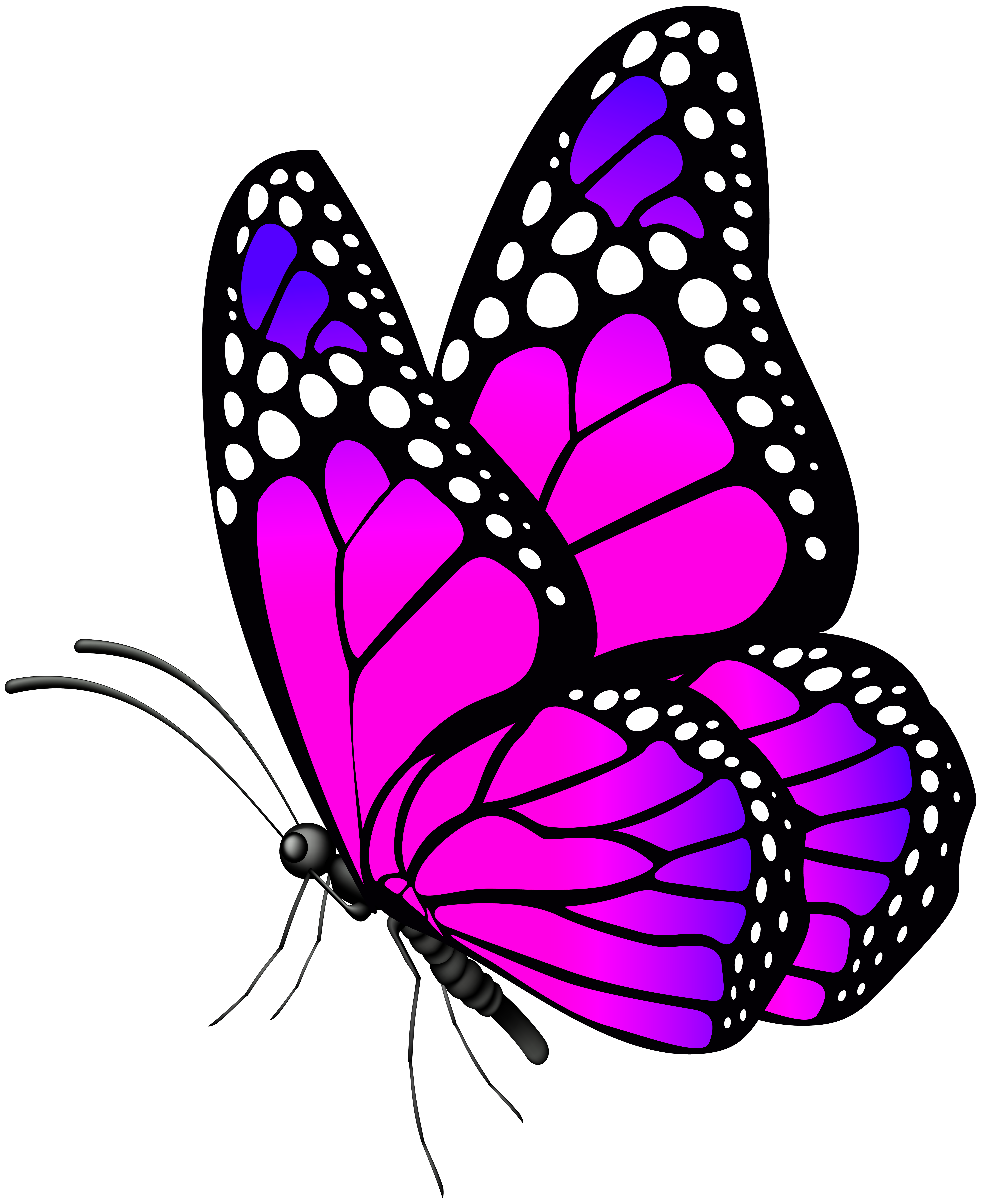 Butterfly Pink PNG Clip Art Image
