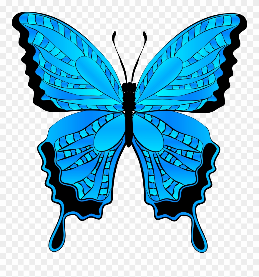 Butterfly clipart free.