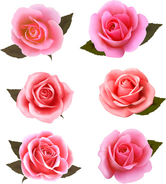 Realistic rose free vector download