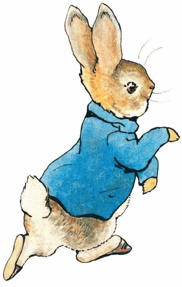 Peter rabbit images.