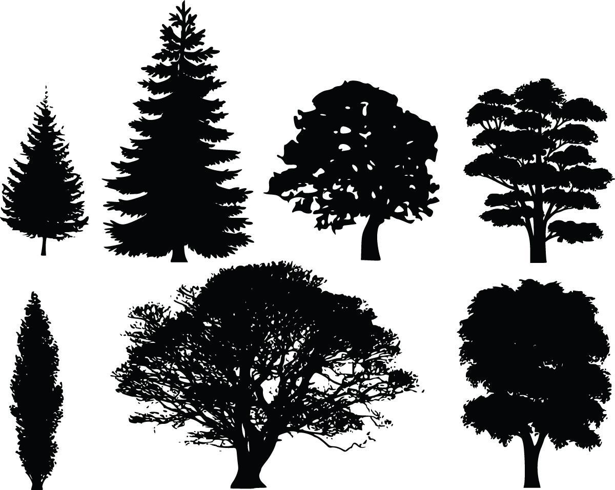 Best tree silhouette.