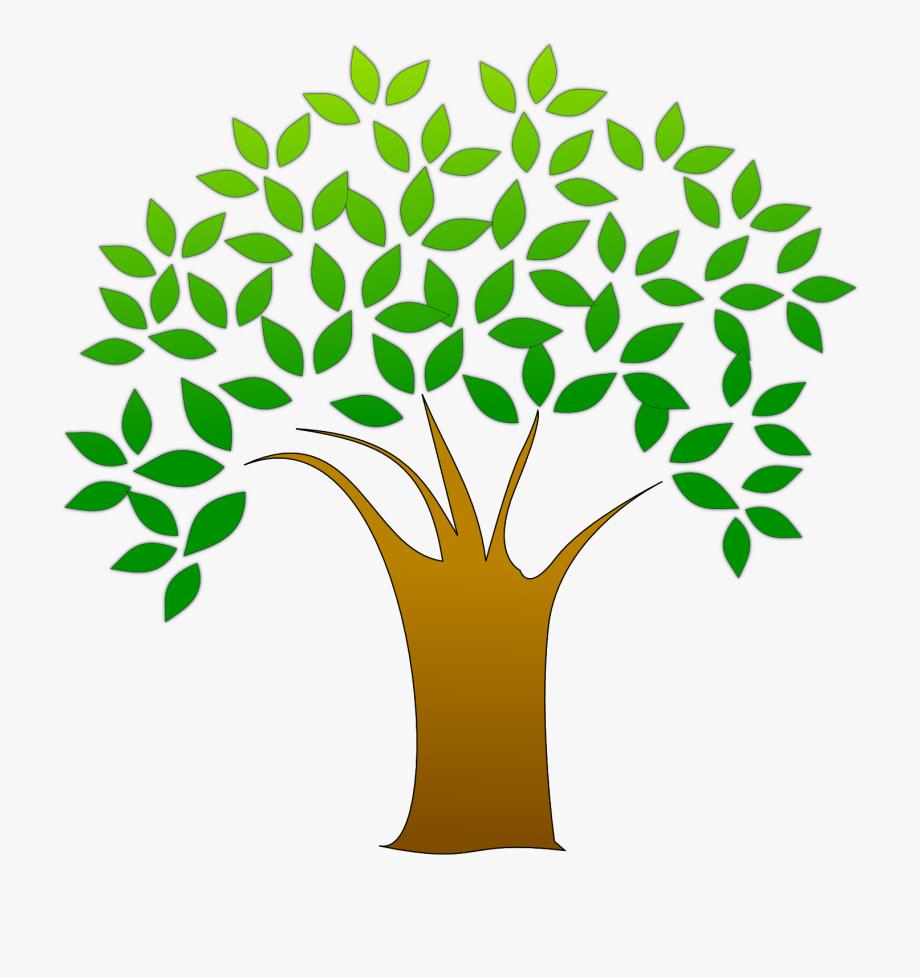 Oak tree tree.