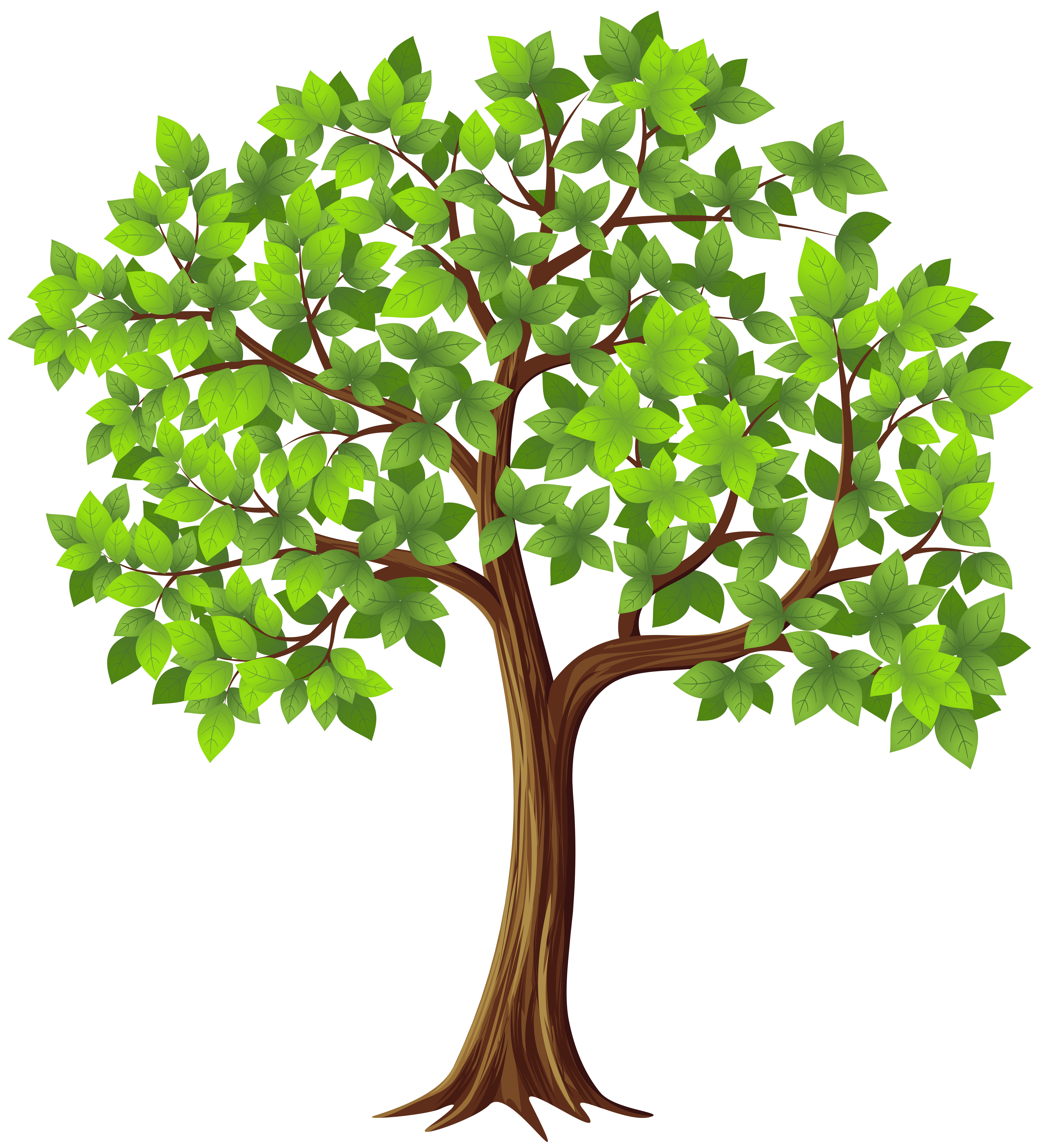 Tree png transparent.