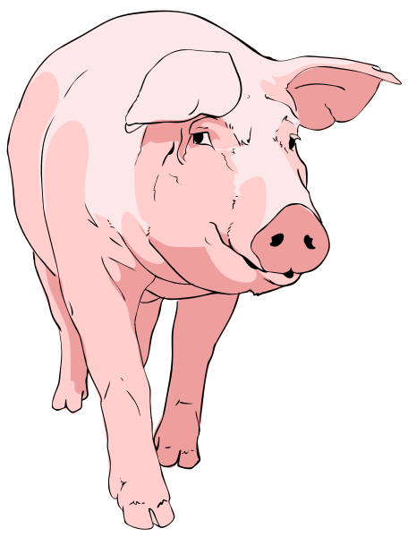 Free pig clipart male. Page of to use
