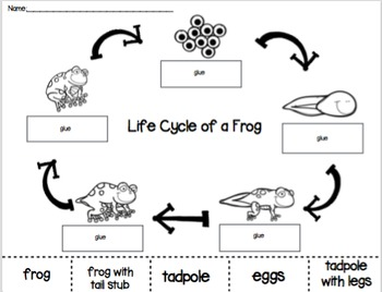 Frog Life Cycle Cut And Paste Worksheets