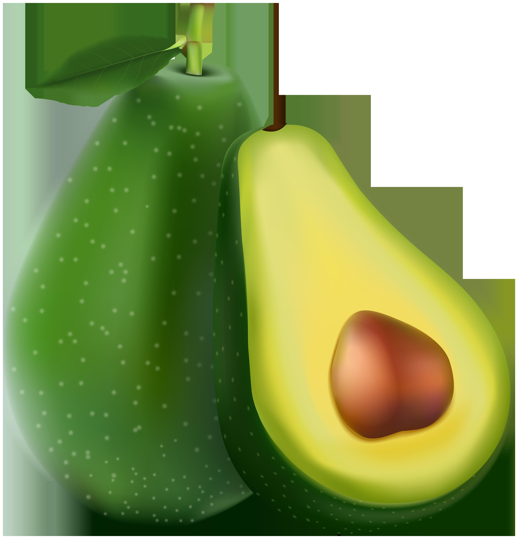 Avocado Transparent PNG Image