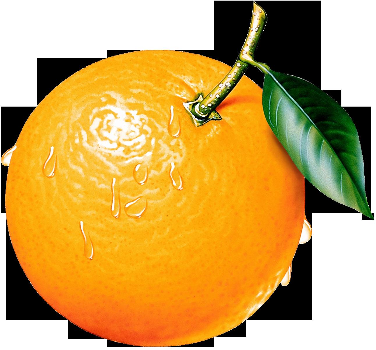 orange clipart