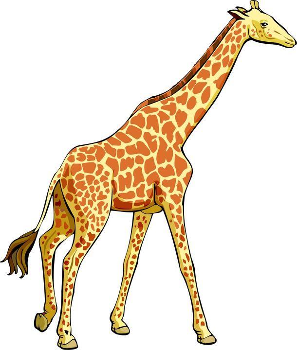 Giraffe clipart real.