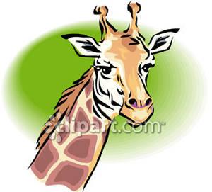 Giraffe head royalty.