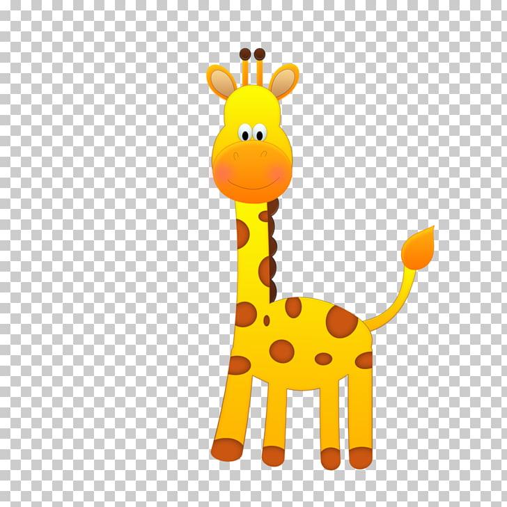 Safari northern giraffe.