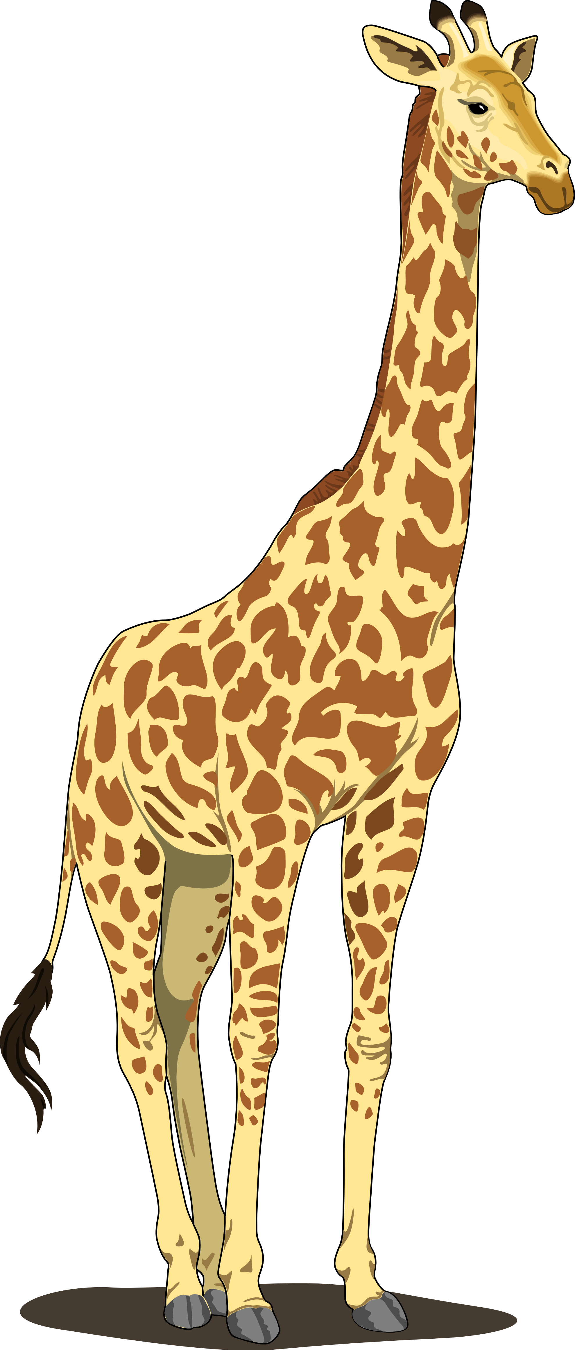 Giraffe png transparent.