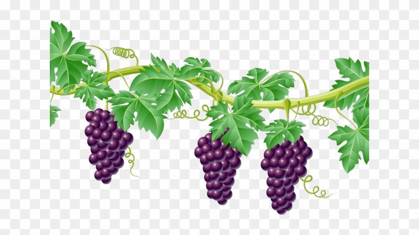 Grapevine clipart divider.