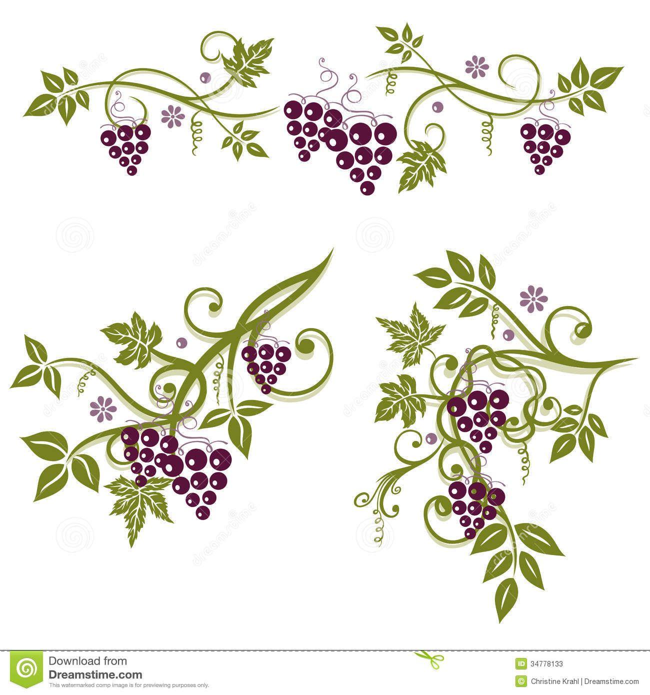 Grape vines image.