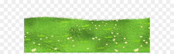 Lawn grasses clip.