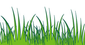 Jungle grass clipart.