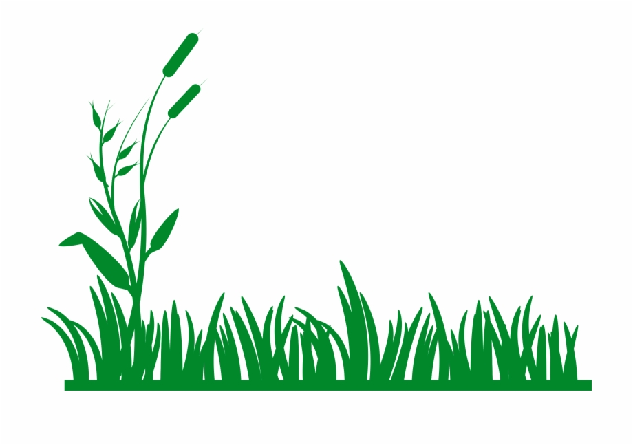 Jungle grass png.