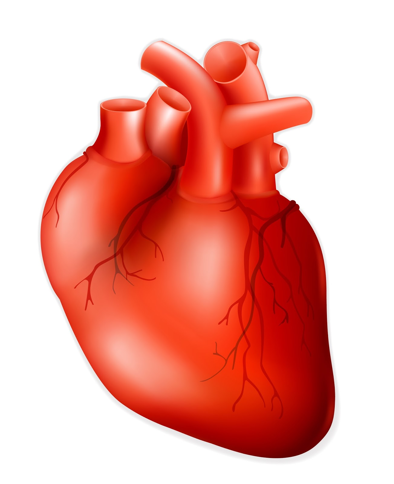 Free Heart Human, Download Free Clip Art, Free Clip Art on