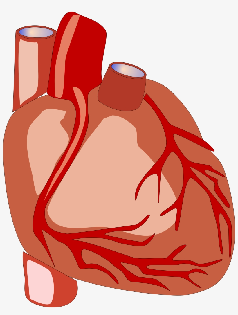 Science Clipart Heart