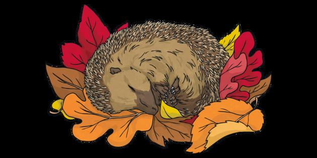 Hedgehog sleeping pile.