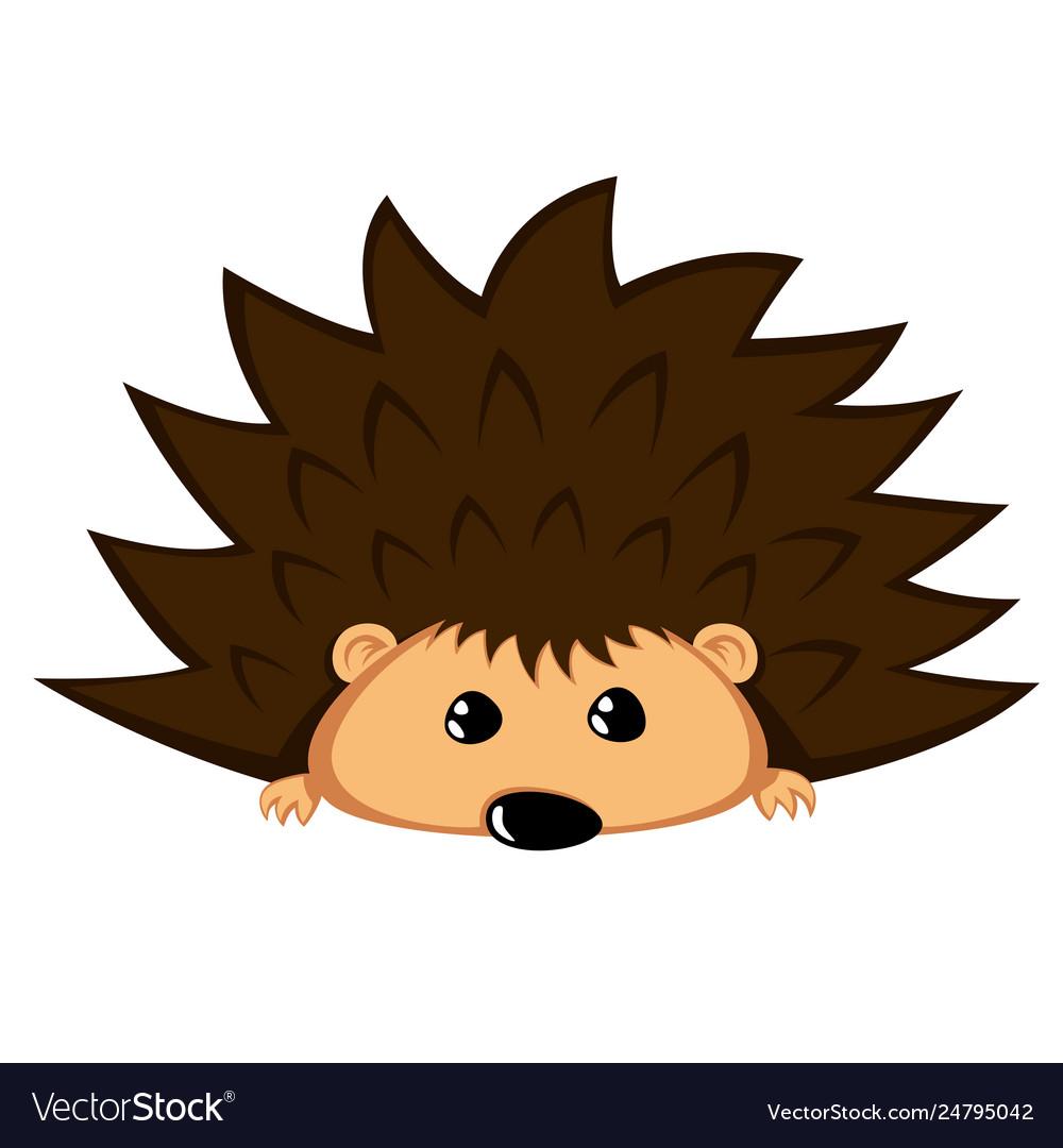 Lovely hedgehog.