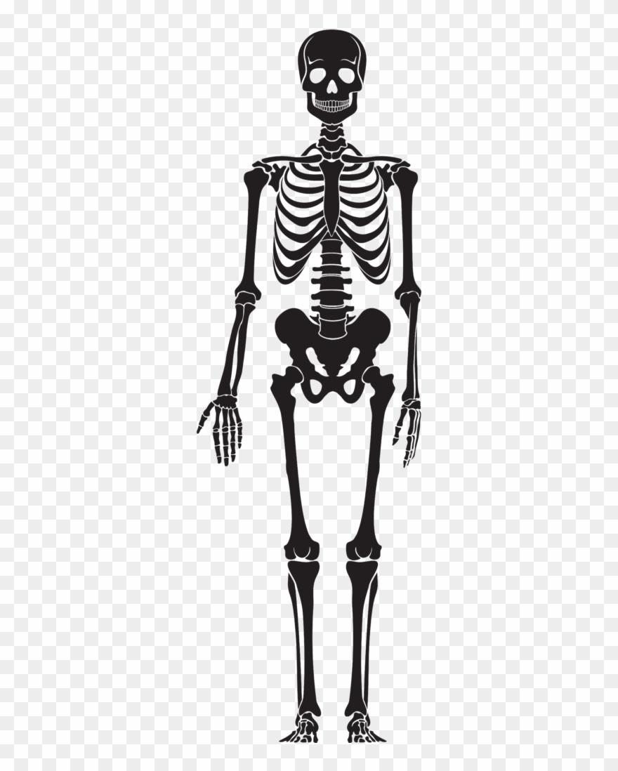 Clipart Skeleton Halloween