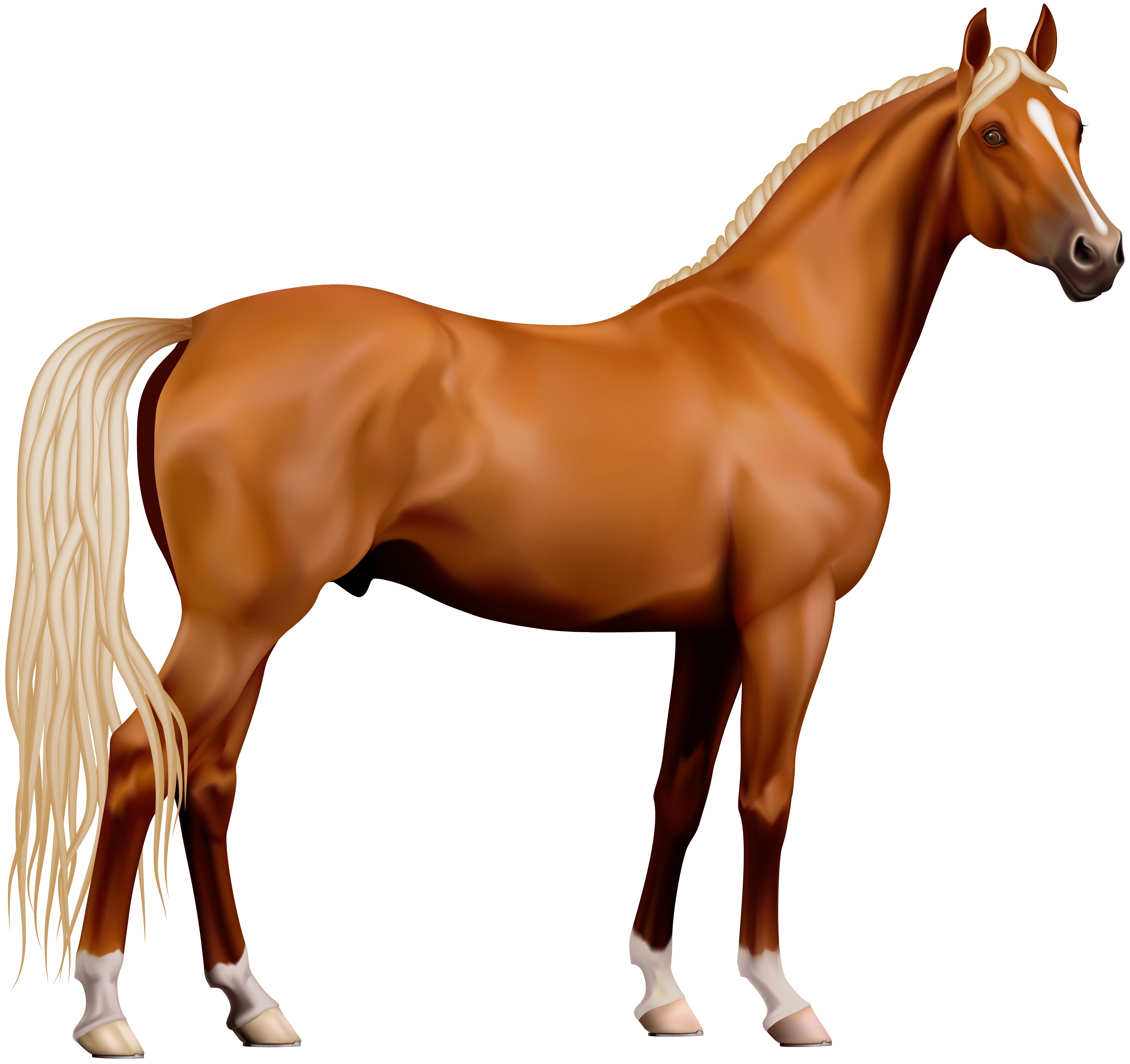 Transparent horse png.