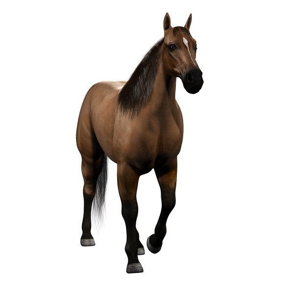 Maya realistic horse.