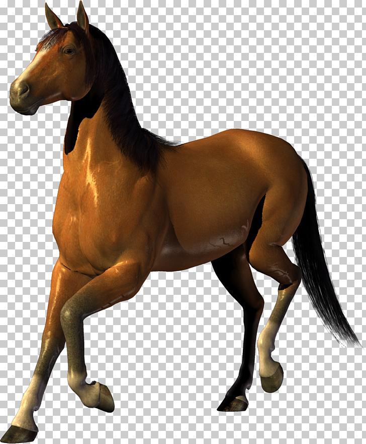 Horse horse free.