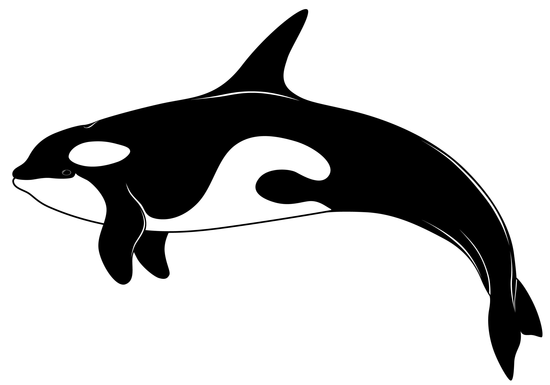 Orca whale clipart.