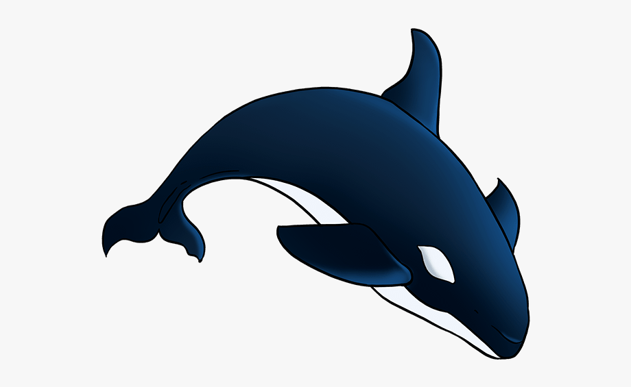Porpoise drawing orca.