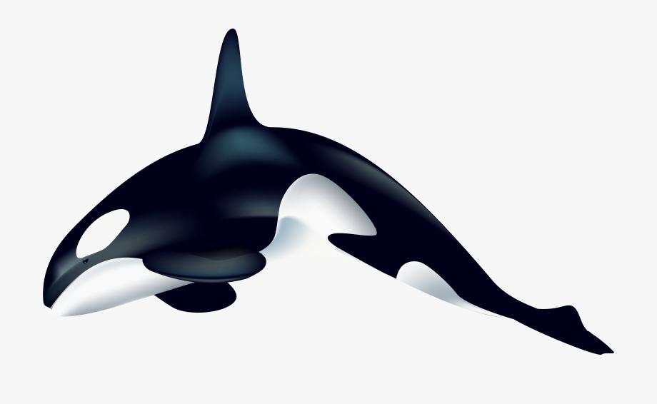 Orca transparent whale.