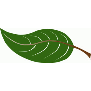 Leaf animated leaves clipart