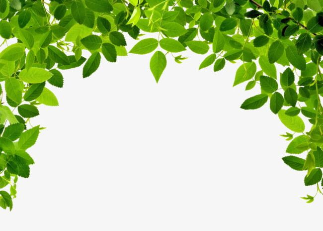 Leaves Border PNG, Clipart, Border Clipart, Green, Leaves