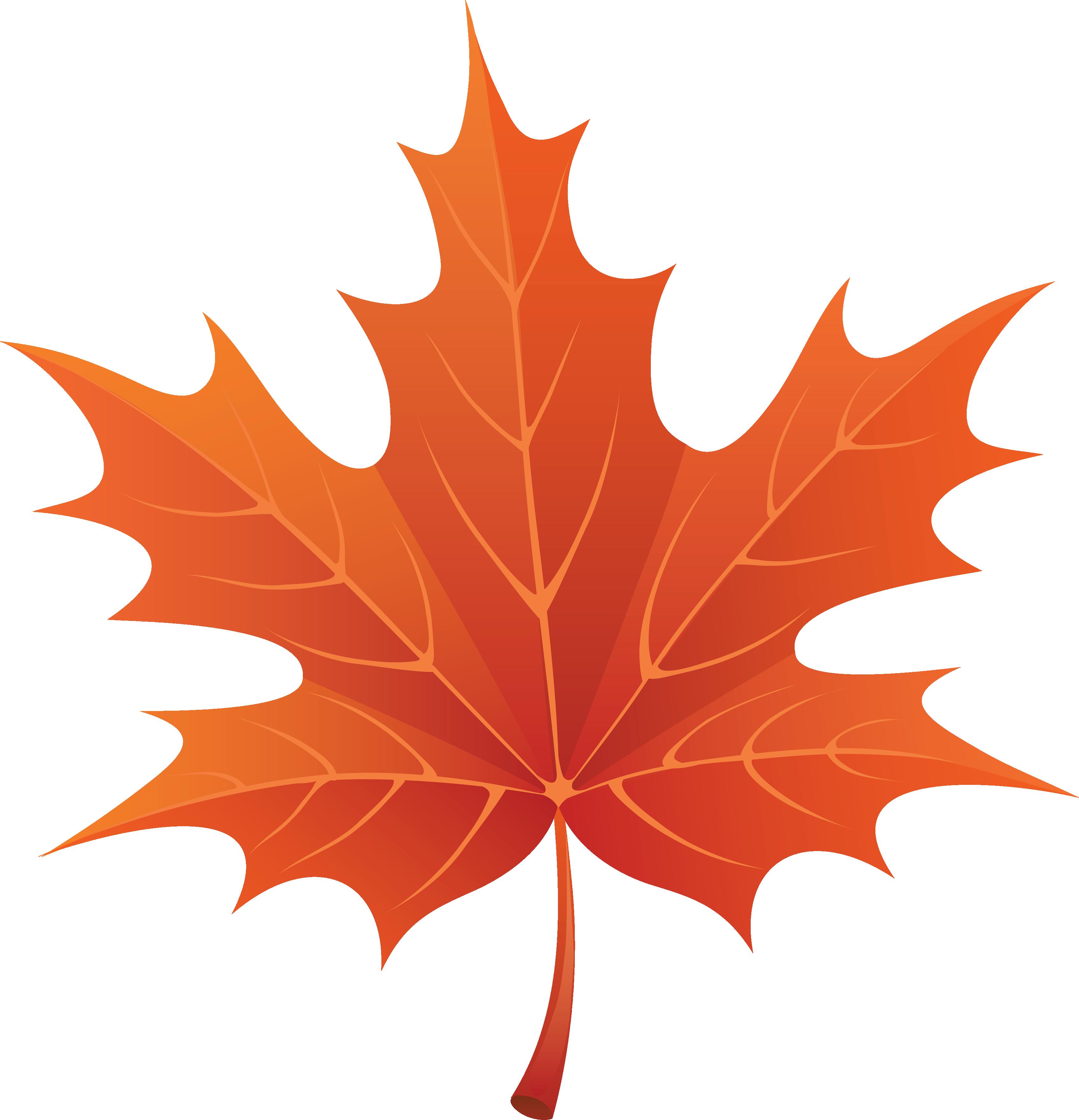 Fall leaves autumn.