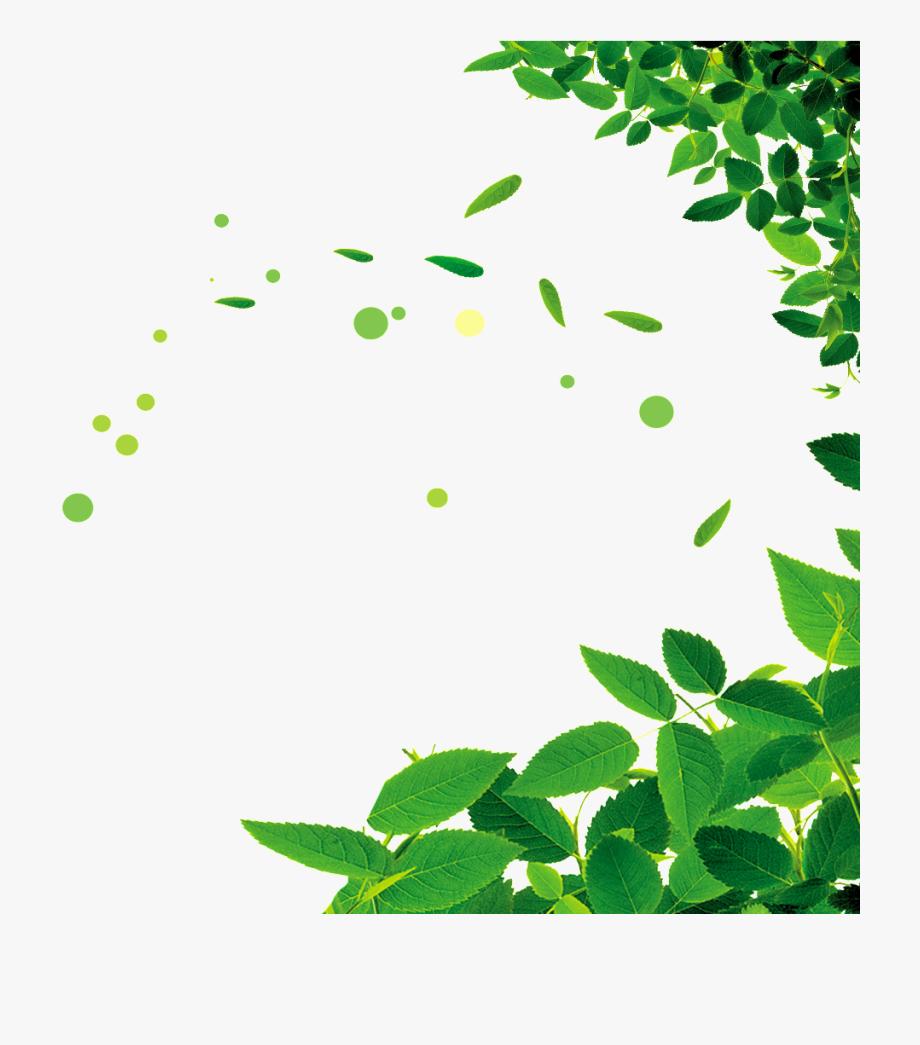 Beautiful green leaf.