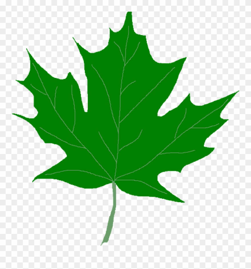 Green leaf clipart.