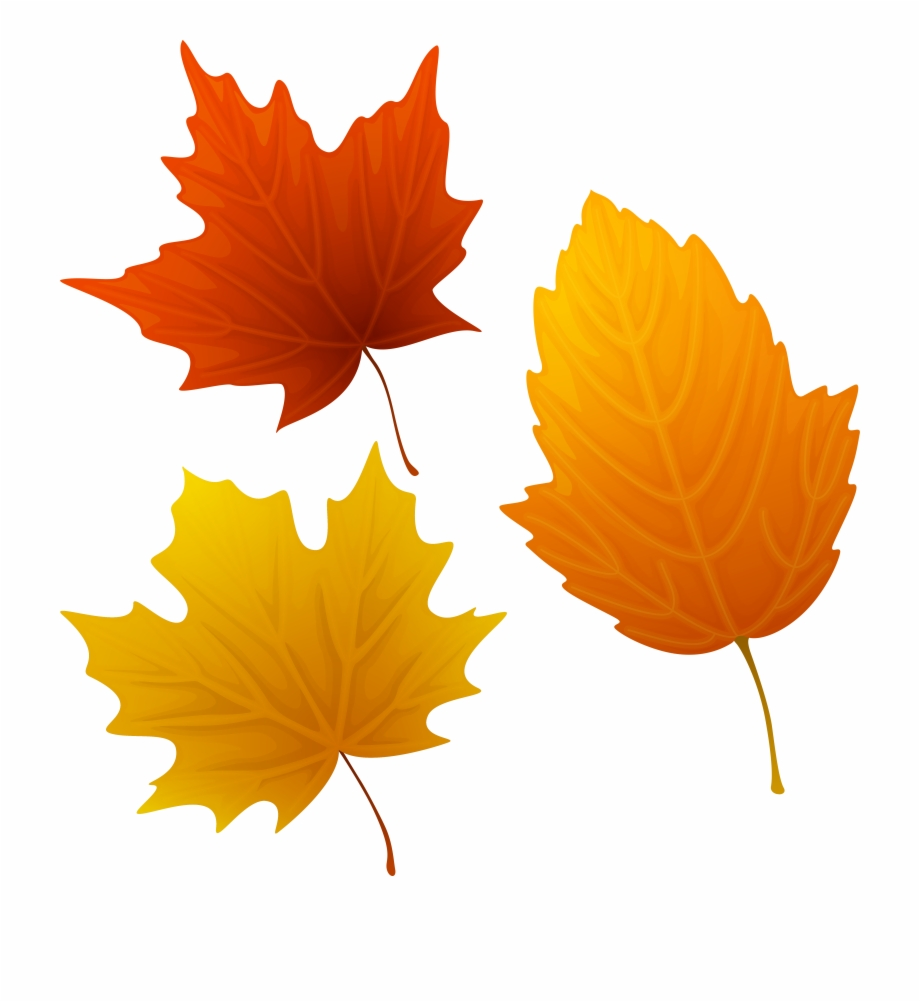 Of Leaves Png Image Gallery Yopriceville View