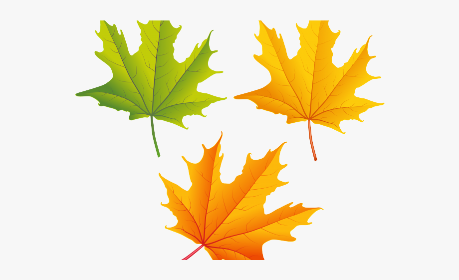 Free maple leaf.